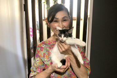 大阪・大正区から、にゃんこたちの家族を探してます!癒しの保護猫カフェ【NyankoCafe】